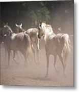 The Daughters Of The Desert Metal Print