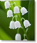 The Lily Of The Valley Metal Print by Boon Mee