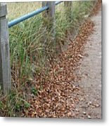 The Path Metal Print by Margaret McDermott