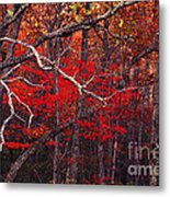 The Woods Aflame In Red Metal Print
