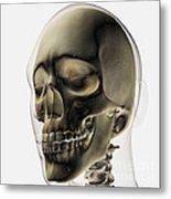 Three Dimensional View Of Human Skull Metal Print by Stocktrek Images