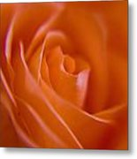 Tilted Rose Metal Print by Kim Lagerhem