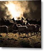Tomales Bay Harem Under The Midnight Moon - 7d21241 - Sepia Metal Print