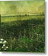 Touch Of Daisies  Metal Print by Dianne  Lacourciere