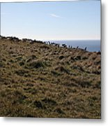 Tules Elks Of Tomales Bay California - 5d21276 Metal Print