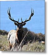 Tules Elks Of Tomales Bay California - 7d21201 Metal Print by Wingsdomain Art and Photography