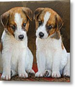 Twin Puppies Portrait Metal Print by R christopher Vest