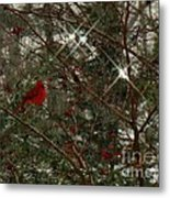 Twinkle Twinkle Little Bird Metal Print by Sharon Costa