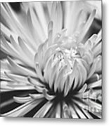Unfolding Metal Print by Artist and Photographer Laura Wrede