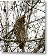 Visiting Owl 2 Metal Print by Rebecca Adams