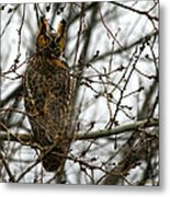 Visiting Owl Metal Print by Rebecca Adams