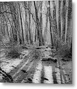 Walking  Amongst Shadows Metal Print by Thomas  MacPherson Jr