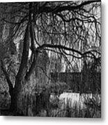 Weeping Willow Tree Metal Print by Ian Barber