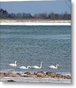 White As Snow Metal Print by Rhonda Humphreys