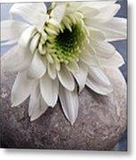 White Blossom On Rocks Metal Print