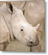 White Rhinoceros Calf Metal Print by Science Photo Library
