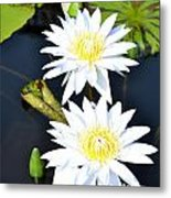 White Water Lilies Metal Print by Jeannette Wagner