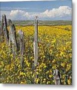 Wildflowers Surround Rustic Barb Wire Metal Print by David Ponton