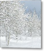 Winter's Glory - Grand Tetons Metal Print by Sandra Bronstein