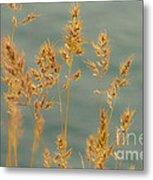 Wispy Grass Metal Print by Sarah Crites