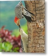 Woody Mama And Baby Metal Print
