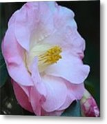 Youthful Camelia Metal Print by Maria Urso