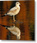 Youthful Reflections Metal Print by Tony Beck