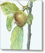 Apple Branch Metal Print by Scott Bennett