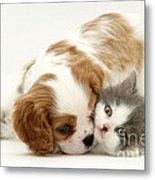 Dog And Cat Metal Print by Jane Burton