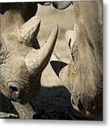 Eastern Black Rhinoceros Metal Print