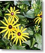 Flower Rudbeckia Fulgida In Full Metal Print by Ted Kinsman