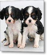 King Charles Spaniel Puppies Metal Print by Jane Burton