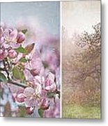 Pink Apple Blossoms Metal Print by Sandra Cunningham