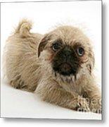 Pugzu And Pug Puppies Metal Print