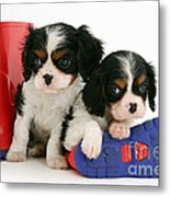 Puppies With Rain Boots Metal Print