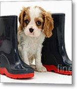 Puppy With Rain Boots Metal Print by Jane Burton