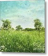 Queen Anne's Lace Wildflowers Metal Print
