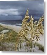 Sea Oats Uniola Panicolata Help Anchor Metal Print by David Alan Harvey