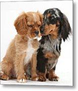 Spaniel & Dachshund Puppies Metal Print by Mark Taylor