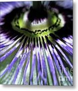 Stamen Of A Passionflower Metal Print by Sami Sarkis