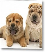 Young Dogs Metal Print by Jane Burton