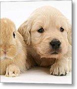 Rabbit And Puppy Metal Print by Jane Burton