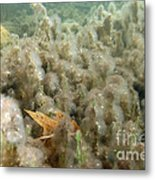 Algae In A Frozen Pond Metal Print by Ted Kinsman