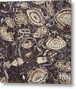 Foraminiferous Limestone Lm Metal Print by M. I. Walker