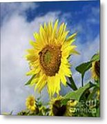 Close Up Of Sunflower Metal Print