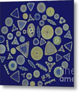 Diatom Arrangement Metal Print by M. I. Walker