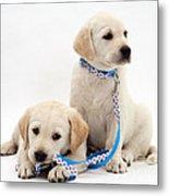 Goldidor Retriever Puppies Metal Print by Jane Burton