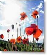Field Of Poppies. Metal Print