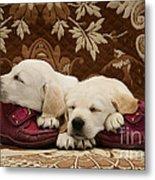 Goldidor Retriever Puppies Metal Print