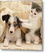 Kitten And Pup Metal Print by Jane Burton
